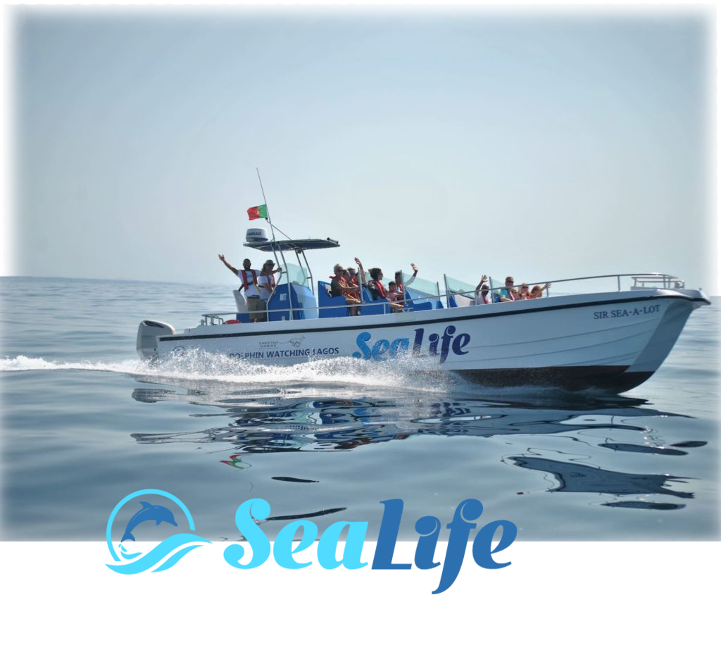 Sealife Dolphin Watching, Lagos